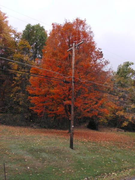 vivid orange tree