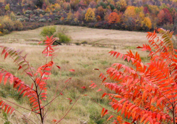 red leaves against a fallow field