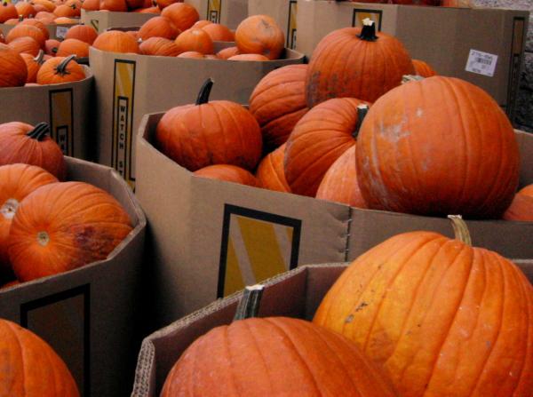 mounds of pumpkins