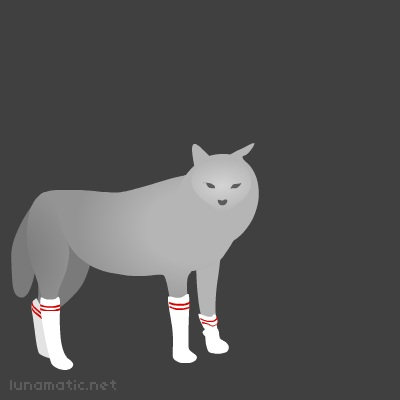 The gray wolf is wearing gym socks to keep his paws warm. One of the socks is already slipping down, it's such a challenge to pull them up again with no thumbs.