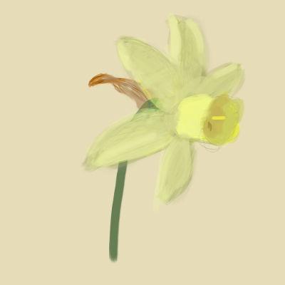 cream daffodil digital painting