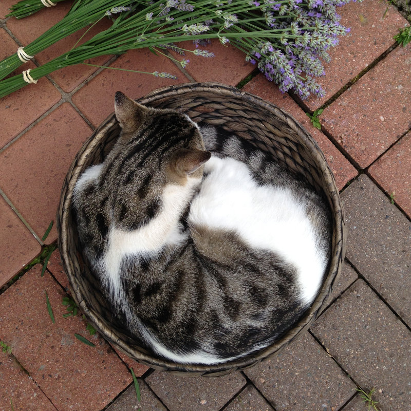A brown and white cat coiled up in a brown basket, exactly the right size